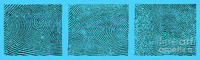 Whorl, Loop, And Arch Fingerprints Poster by Science Source