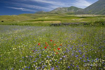 Wildflower Fields Poster by Bob Gibbons