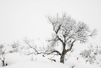 Winter Sage Poster by Sandi Mikuse