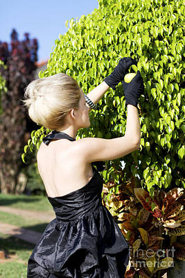 Woman Picking Fruit Poster by Jorgo Photography - Wall Art Gallery
