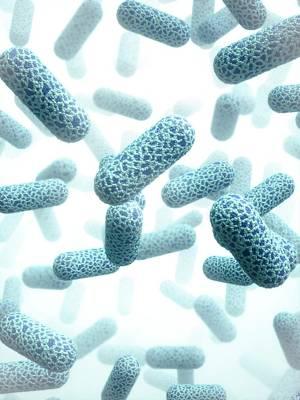 E. Coli Bacteria Poster