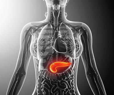 Human Pancreas Poster by Pixologicstudio