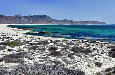 Isla De Espiritu Santo, Baja, Mexico Poster by Mark Williford
