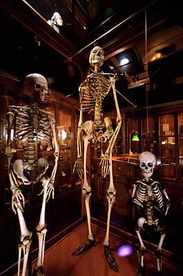 2000s Three Human Skeletons Displayed Poster