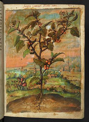 Medicinal Plant Poster