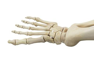 Human Foot Anatomy Poster