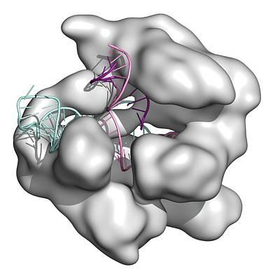 Crispr-cas9 Gene Editing Complex Poster