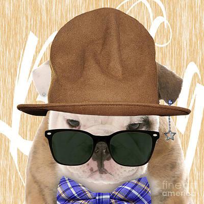 Bulldog Collection Poster