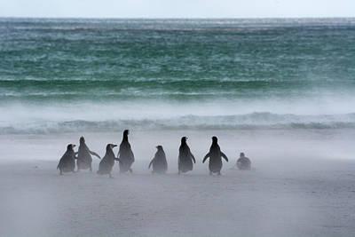 Falkland Islands Poster by Inger Hogstrom