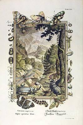5th Day Of Creation, Scheuchzer, 1731 Poster by Paul D. Stewart