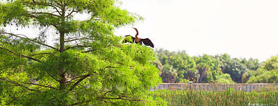 Anhinga Anhinga Anhinga On A Tree Poster by Panoramic Images