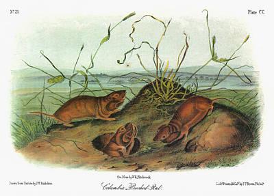 Audubon Gopher Poster