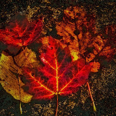 Autumn Leaves Poster by David Patterson