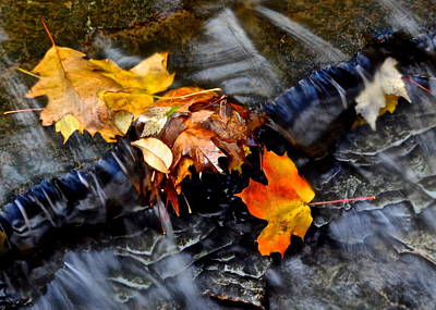 Autumn Leaves Poster by Frozen in Time Fine Art Photography