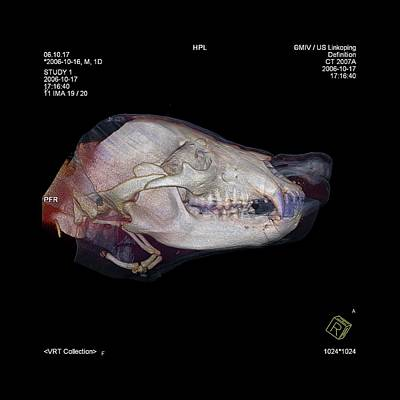 Bear's Head Poster