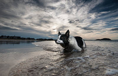 Border Collie Poster by Keith Thorburn LRPS