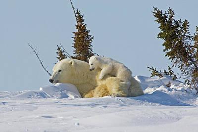 Canada, Manitoba, Wapusk National Park Poster by Jaynes Gallery