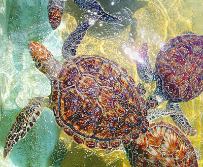 Cayman Turtles Poster by Carey Chen