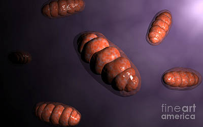 Conceptual Image Of Mitochondria Poster by Stocktrek Images