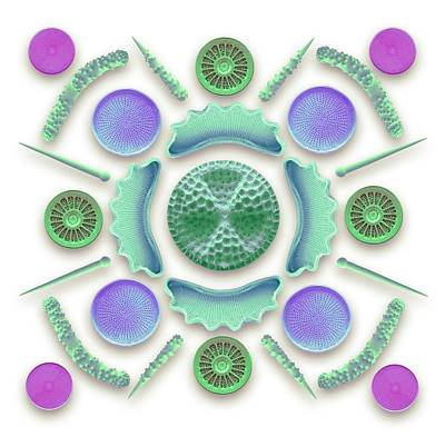 Diatoms And Sponge Spicules Poster by Steve Gschmeissner