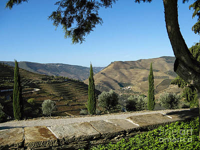 Poster featuring the photograph Douro River Valley by Arlene Carmel