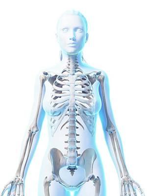Female Skeleton Poster by Sebastian Kaulitzki