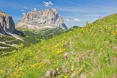 Flowery Alpine Meadow Poster