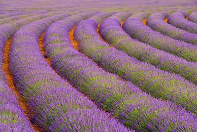France, Provence Region Poster by Jaynes Gallery