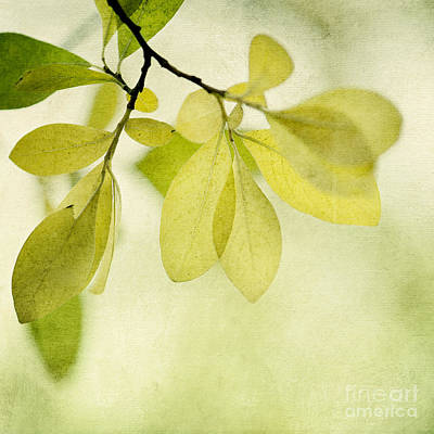 Green Foliage Series Poster by Priska Wettstein