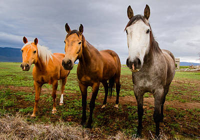 3 Horses Poster by Jean Noren