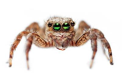 Jumping Spider Poster by Alex Hyde