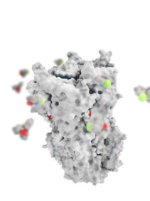 Ketamine Drug Binding To Ion Channel Poster