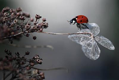 Ladybird On Hydrangea. Poster by Ellen Van Deelen