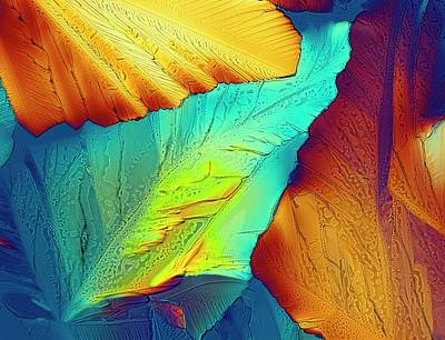 Light Micrograph Of Citric Acid Crystals Poster
