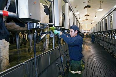 Milking Parlour Poster by Jim West