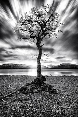 Millarochy Bay Tree Loch Lomond Poster