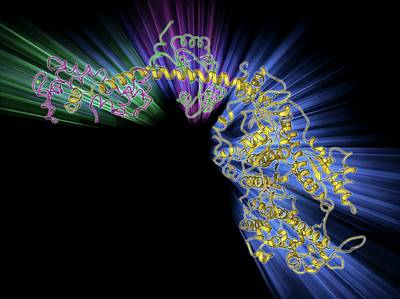 Molecular Motor Protein Poster
