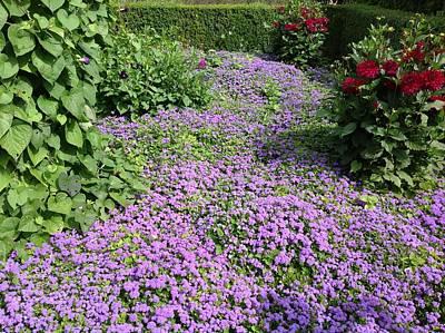 Monet's Garden In France Poster