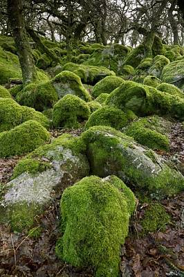 Moss-covered Woodland Poster by Science Photo Library