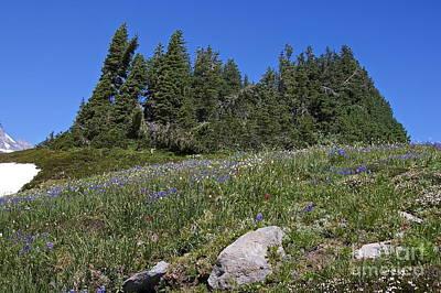 Mount Rainier Wildflowers Poster by Sean Griffin