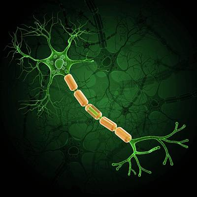 Nerve Cell Poster