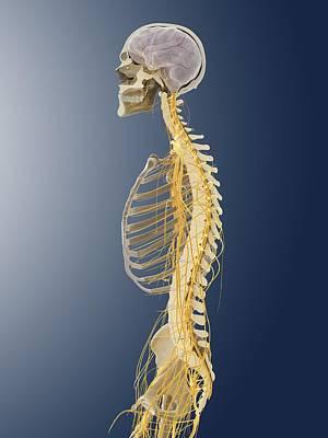 Nervous System, Artwork Poster