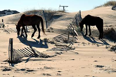 Outer Banks Wild Horses Poster by Mike Baltzgar