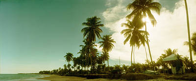Palm Trees On The Beach In Morro De Sao Poster