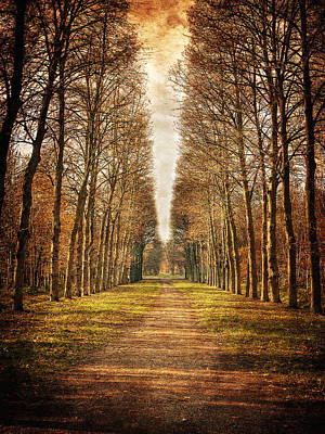 Poster featuring the photograph Path In The Woods / Versailles by Barry O Carroll