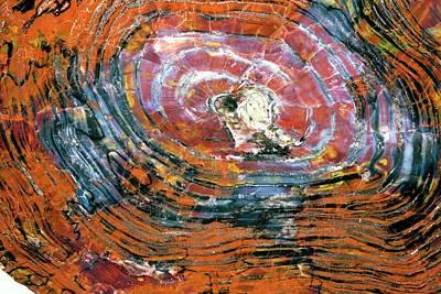 Petrified Wood Poster by Dirk Wiersma