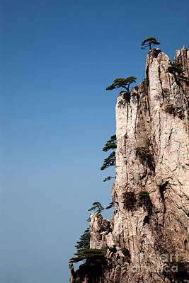 Pine Trees On Huangshan Mountain China Poster