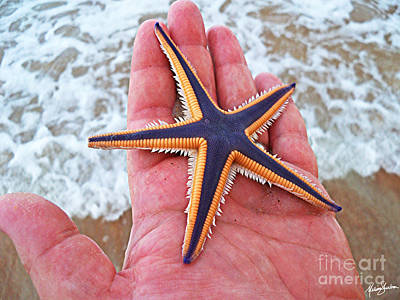 Poster featuring the photograph Royal Starfish - Ormond Beach Florida by Melissa Sherbon