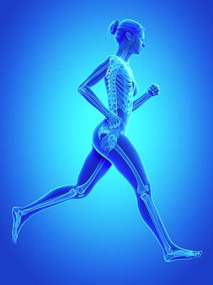 Skeletal System Of A Runner Poster
