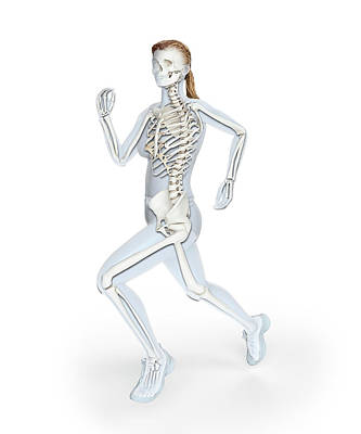 Skeleton Of Runner Poster